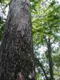 cypress 2 thumb