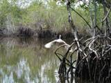 mangrove 2 thumb