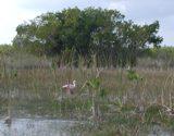 mangrove 3 thumb