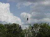 mangrove 5 thumb